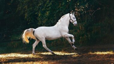 Weißes, galoppierendes Pferd